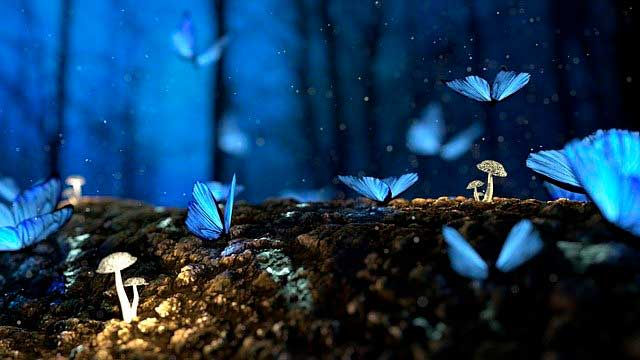 Lee más sobre el artículo Soñar con una mariposa
