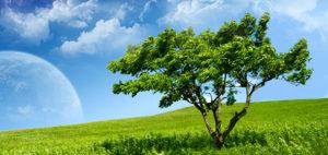 Soñar con árboles