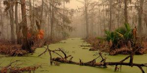 Soñar con un pantano