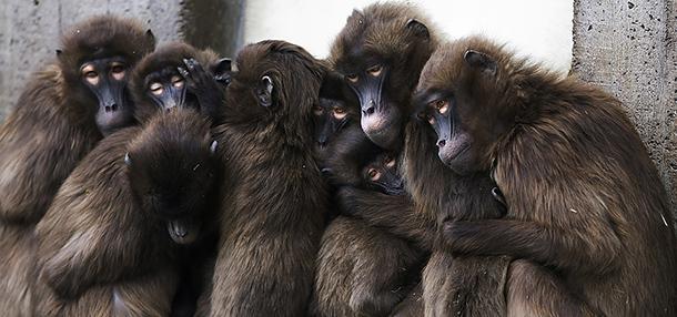Lee más sobre el artículo Soñar con monos