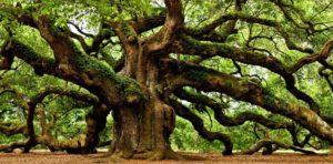 Soñar con árboles o un árbol