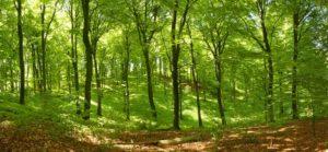 Lee más sobre el artículo Soñar con un bosque