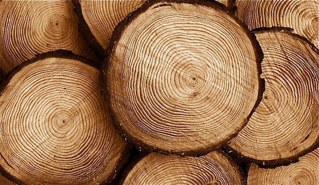 Lee más sobre el artículo Soñar con madera