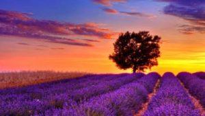 Soñar con un paisaje