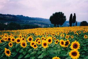 Lee más sobre el artículo Plantas que ayudarán a mejorar la positividad en nuestro hogar