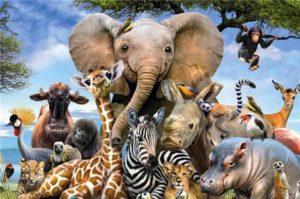 Lee más sobre el artículo Significado de soñar con animales ( por especie)
