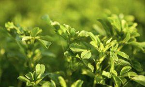 Lee más sobre el artículo Soñar con plantas