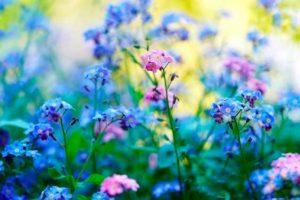 Soñar con un jardín