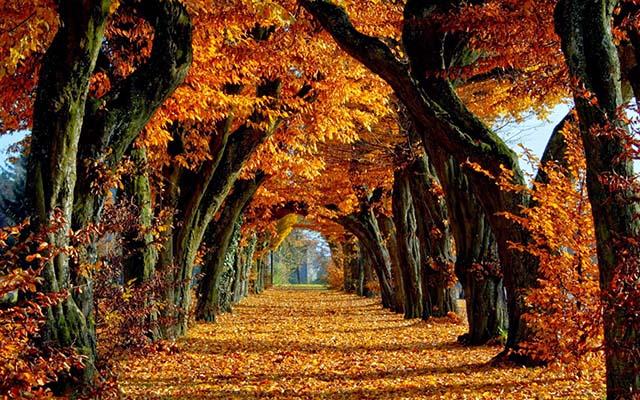 Soñar con el otoño
