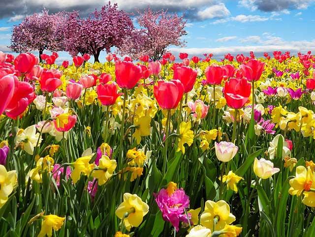 Rituales para el equinoccio de primavera