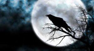 Lee más sobre el artículo Significado de soñar con un cuervo