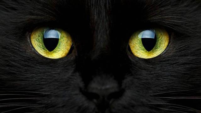 Soñar con gatos y su significado