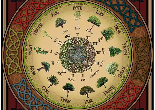 Horóscopo Celta ¿Que árbol eres?