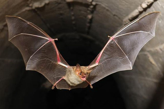 El significado de soñar con murciélagos