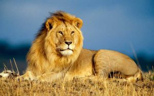 Significado de soñar con leones