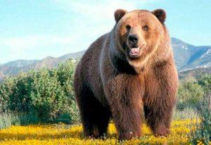 Lee más sobre el artículo Significado de soñar con osos