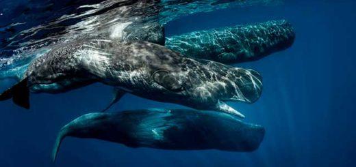 Significado de soñar con ballenas