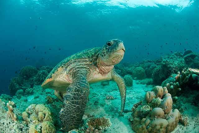 Lee más sobre el artículo Soñar con tortugas