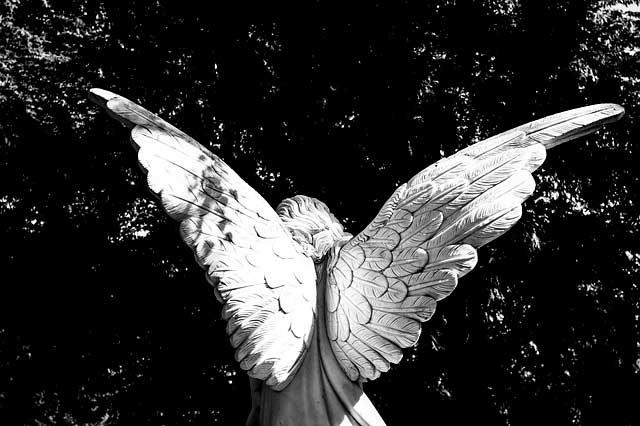 Soñar con alas blancas