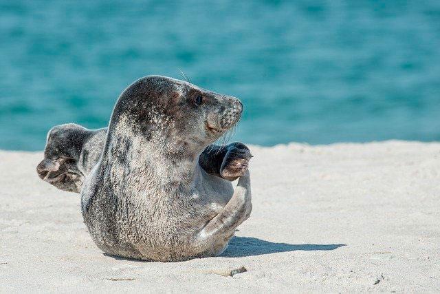 Soñar con focas o lobos marinos